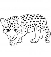 Cheetah Coloring Page - Free Cheetah Coloring Pages ... | 200x180