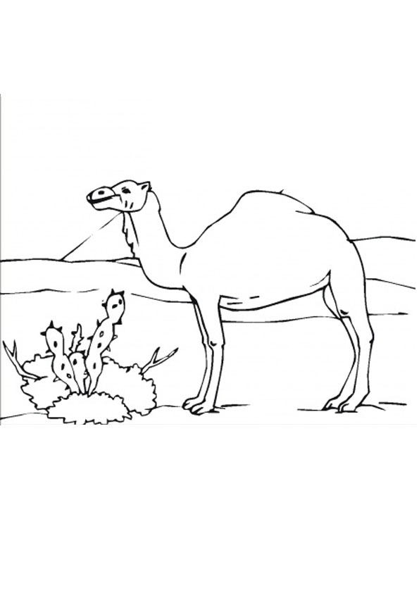 Desert Coloring Pages | Coloringnori - Coloring Pages for Kids