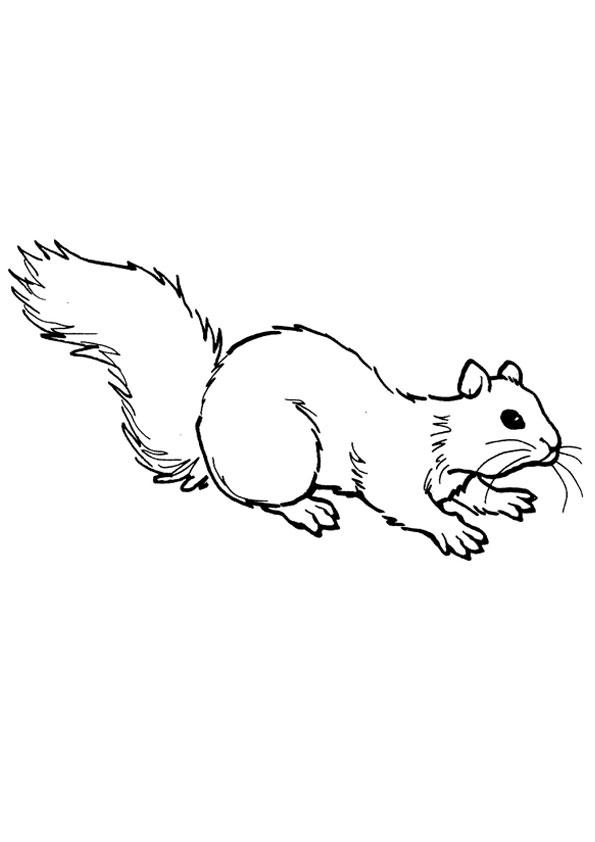 Printable Squirrel Coloring Pages | Coloring Me | Squirrel ... | 842x595
