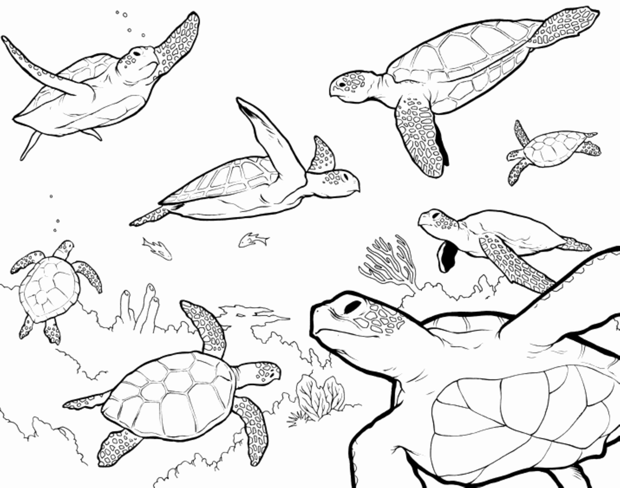 Coloring Pages   Sea Turtle Coloring Page Unique Loggerhead Pages ...