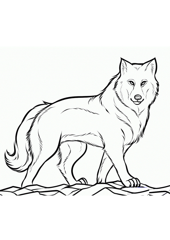 Coloring Pages Free Printable Wolf Coloring Pages For Kids