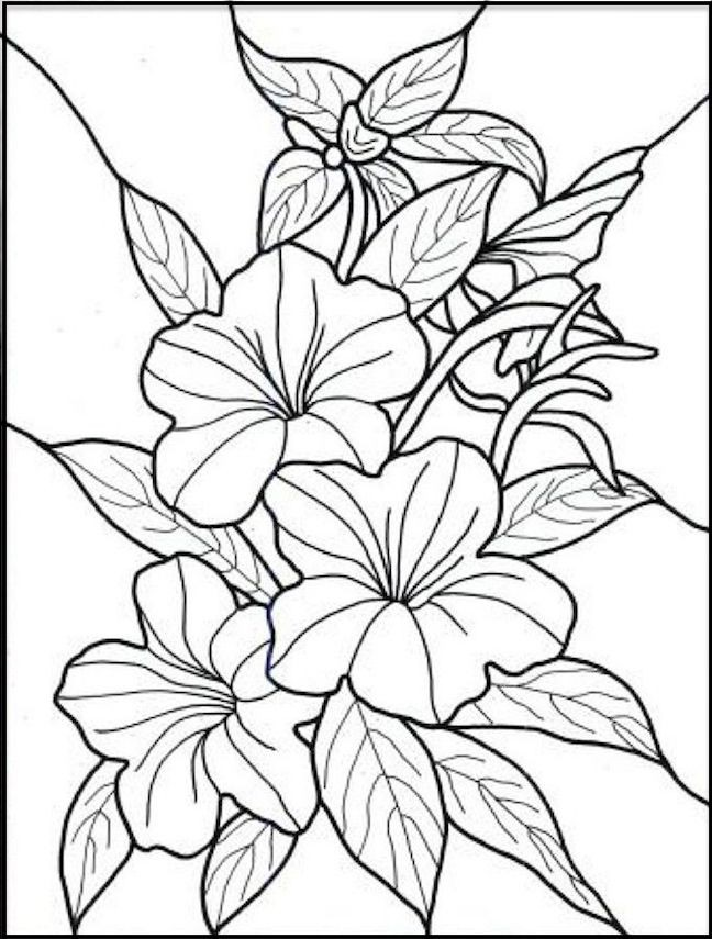 Coloring Pages Spring Flower Coloring Pages Lovely The Spring Flowers Coloring Page Collection Of Spring Flower Coloring Pages