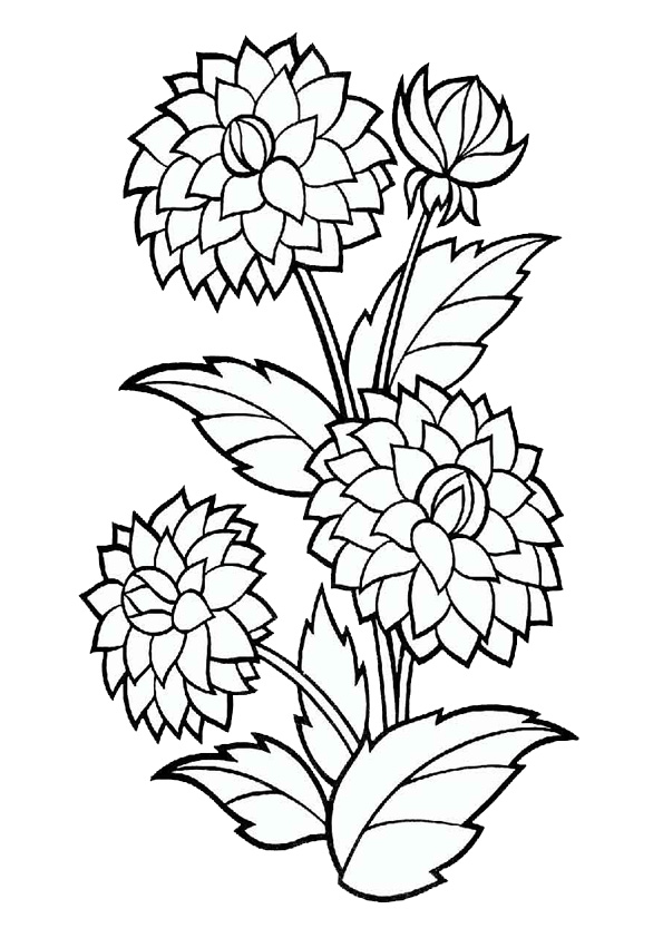 Coloring Pages Marigold Flower Plant Coloring Pages
