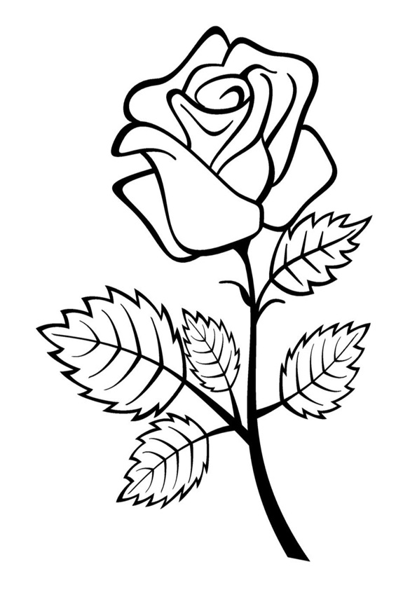 Coloring Pages Rose Flower Coloring Pages