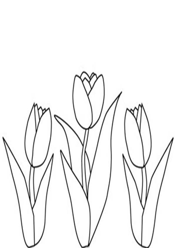 Coloring Pages Tulip Flower Garden Coloring Pages