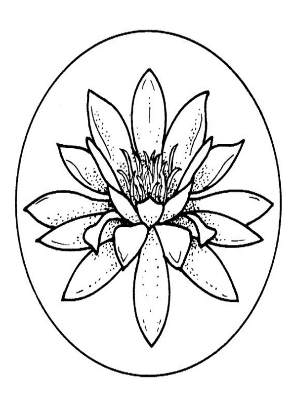 Coloring Pages Water Lily Coloring Page For Kids