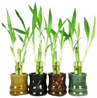 Plants Diwali Gift